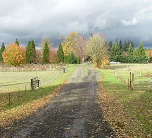 Twin Maple Lane, toward the highway: photo by Sienna