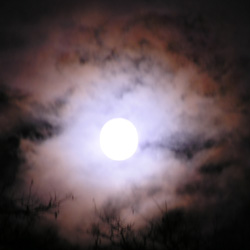 the full moon from my magic back porch on Twin Maple Lane: photo by Sienna